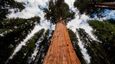Sequoia National Park General Sherman